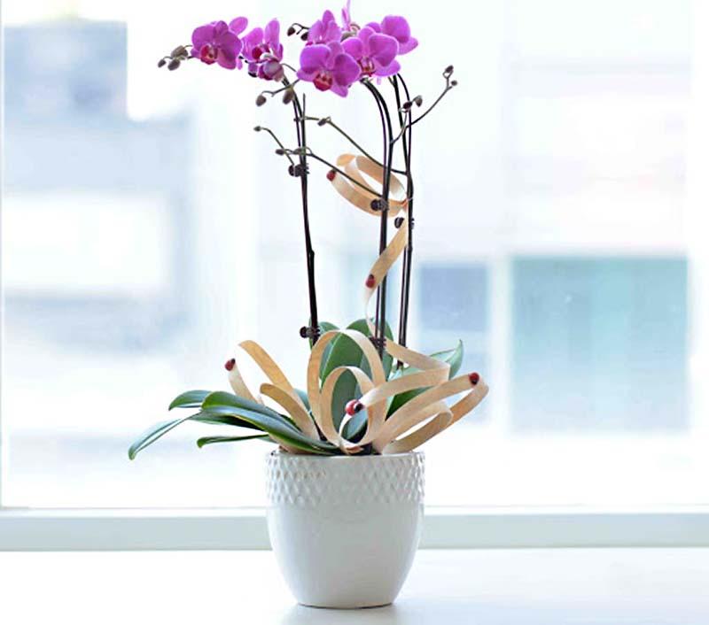 Đối với hoa Lan trồng trong chậu