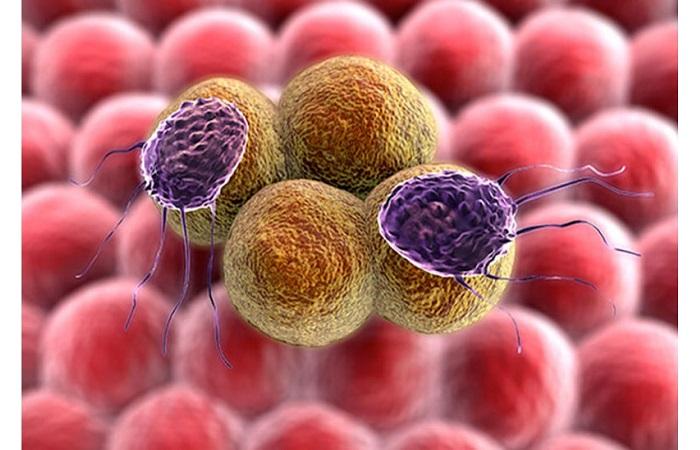 Ức chế sự phát triển của các khối u
