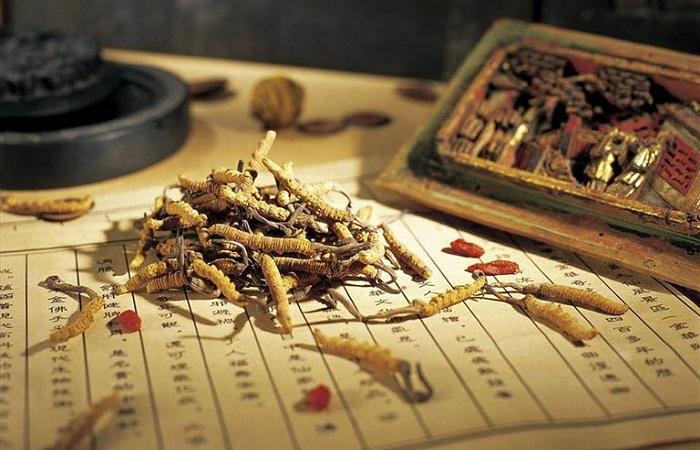 Xuất xứ của đông trùng hạ thảo